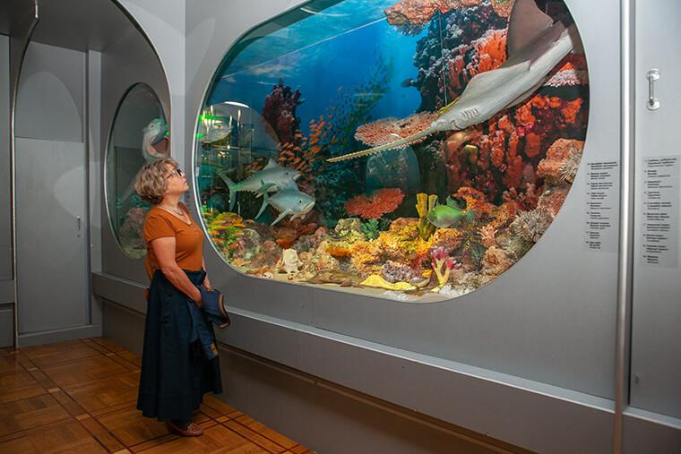 Fishes in aquarium