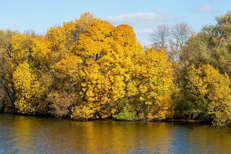Autumn on Dnieper