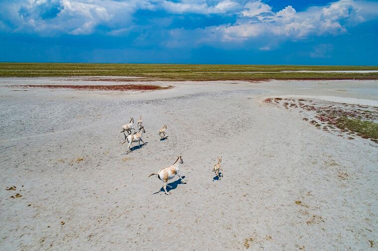 Животные острова Бирючий